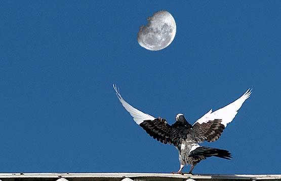 Bird Lifting Off