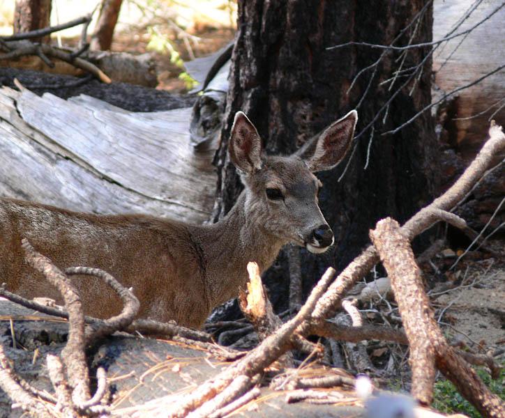 Deer having breakfast