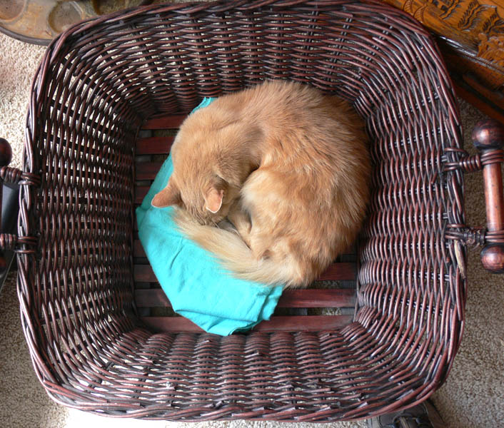 Round cat in square basket
