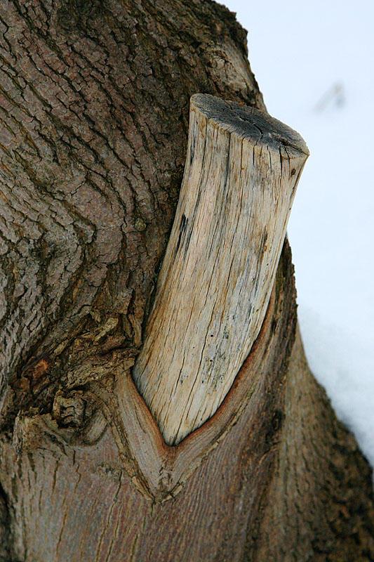 Once a limb