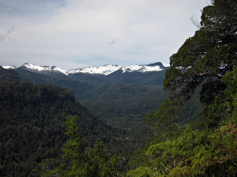 Puyehue National Park, from El Pionero viewpoint