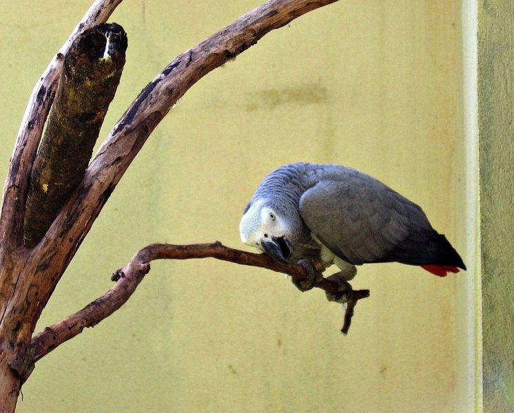 Bird Park, Iguazu (Brazil)