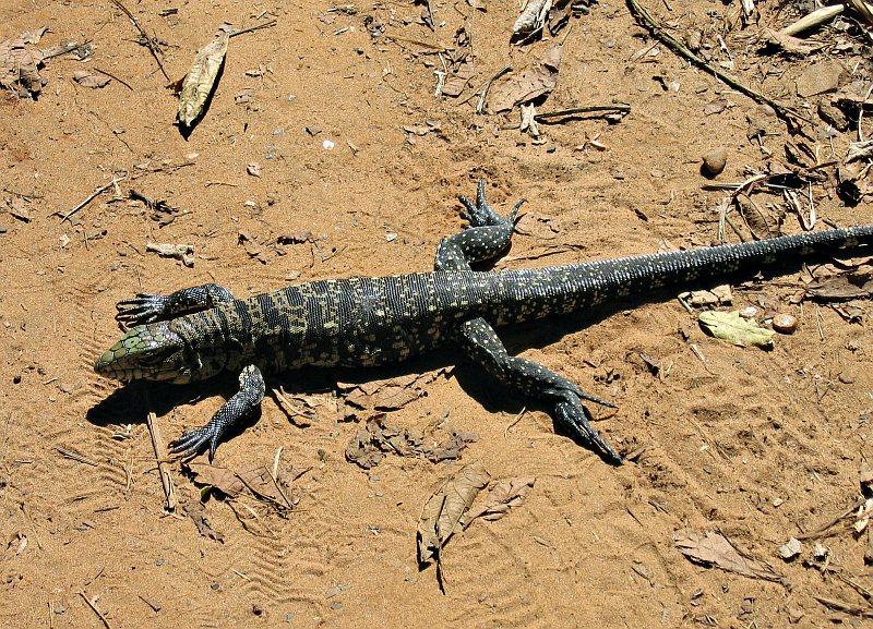 Iguazu - Macuco Trail