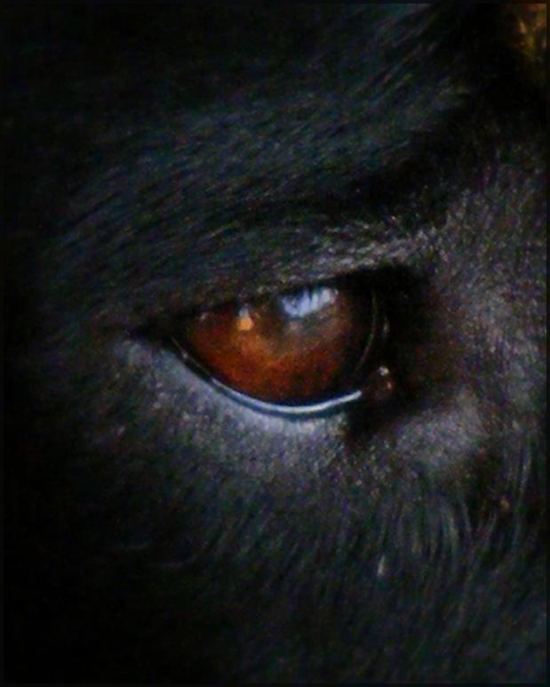watchdog II