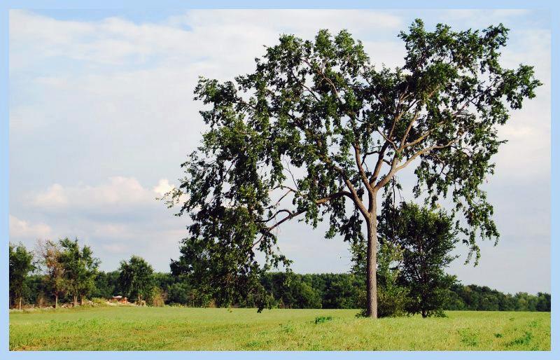 Le fameux arbre