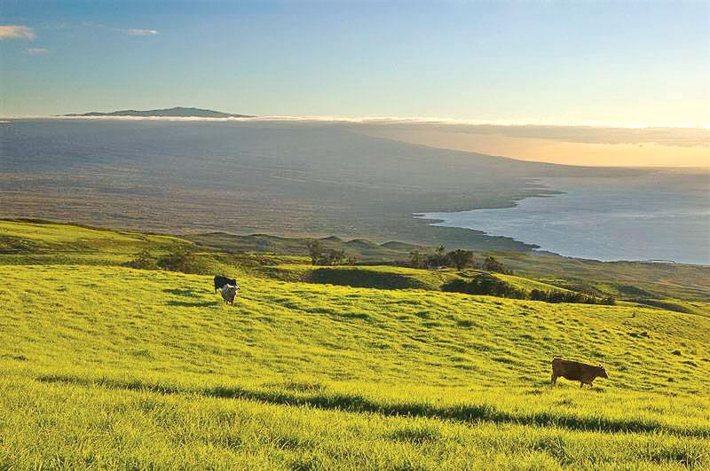 Pastoral view of the Kohala Coast and the Hulalai Volcano