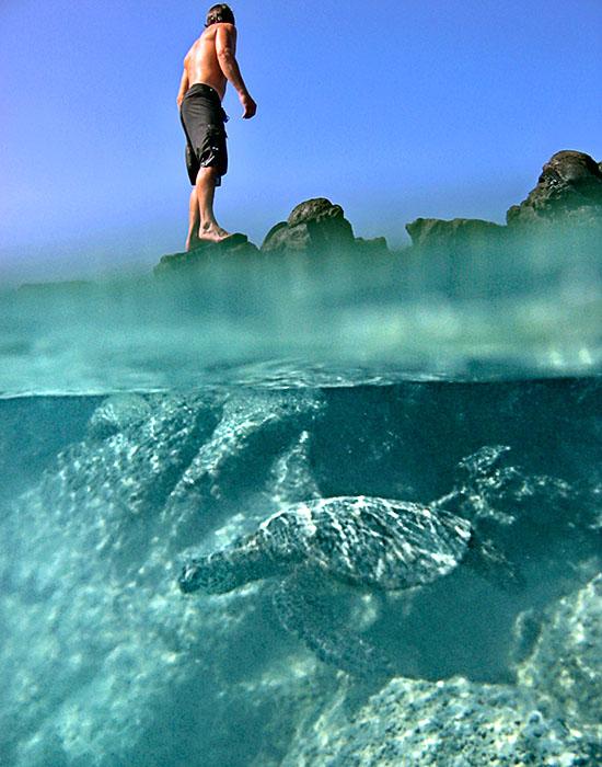 Turtle swimming (half-under shot)