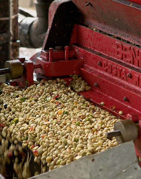 Coffee cherries processing