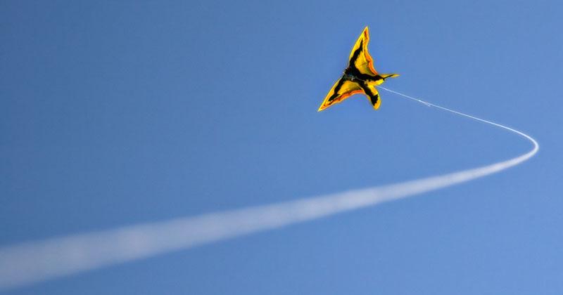 Venice Beach froggy kite