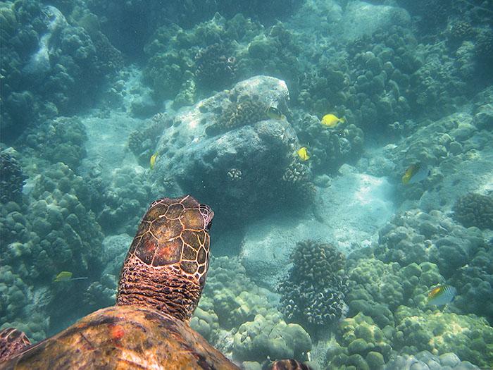 Swimming in harmony