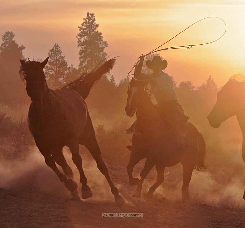Hooves & Dust 11