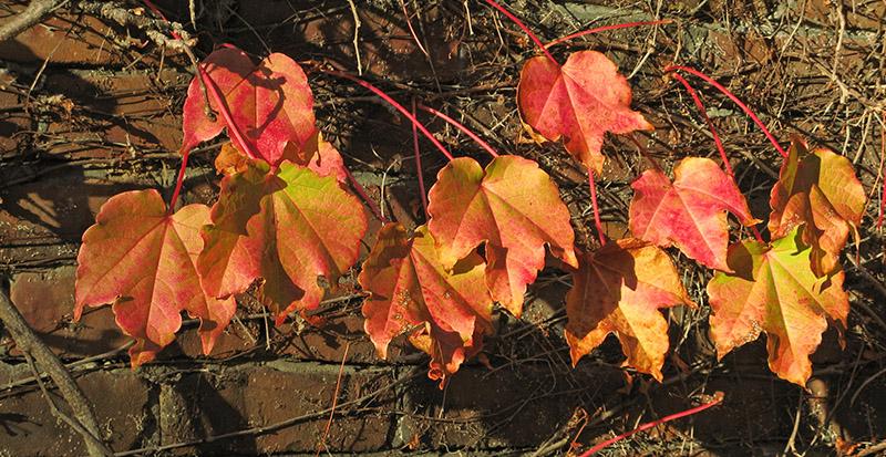 Sunlight captured in leaves<br />4644