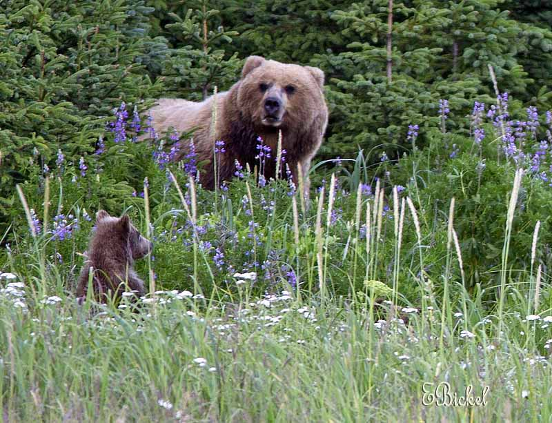 Where There Is a Cub