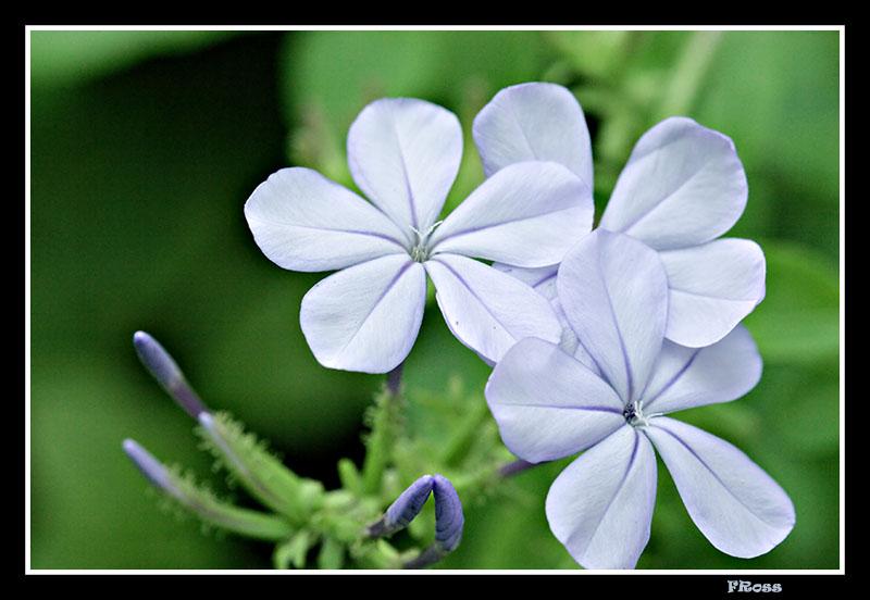 Blue Macro.jpg
