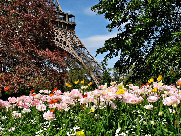 Eiffel Tower Lost in the Flowers