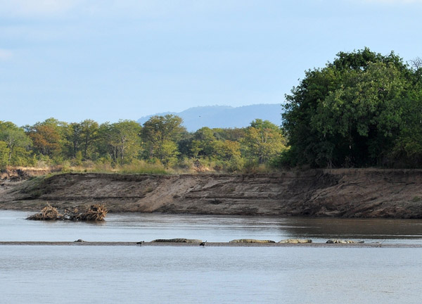Wildlife Camp is on the Luangwa River opposite South Luangwa National Park