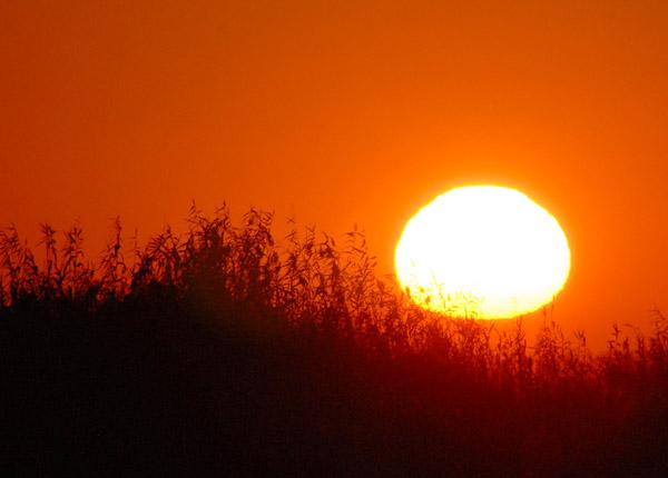 Orange sunset with tall grass