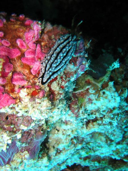 MaldivesNov05 429.JPG