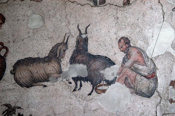Man milking a goat