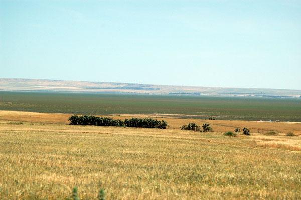 The open plains around Kairouan, Tunisia