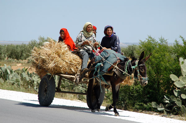 Women riding a donkey cart with hay along the road to Kairouan