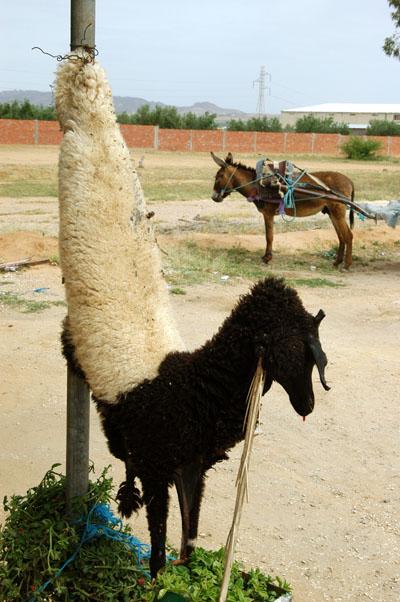Sheep skin hanging outside a roadside Tunisian restaurant
