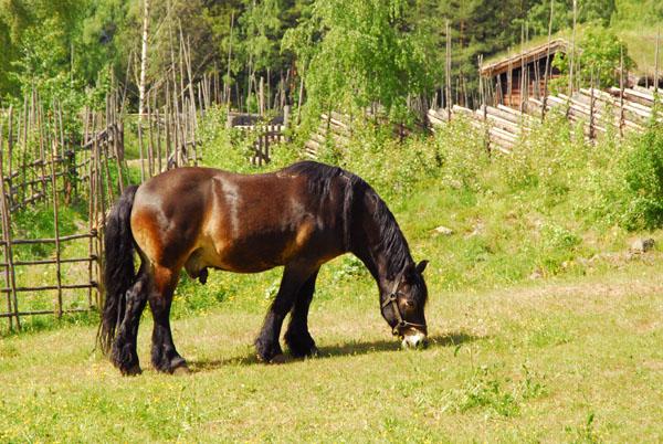 Horse, Maihaugen