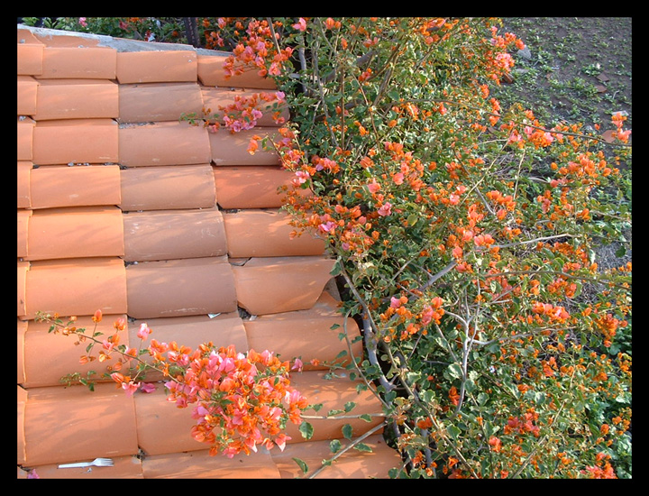 terra cotta tile and leaves 2