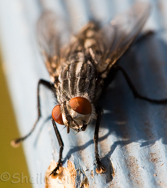 Fly close up