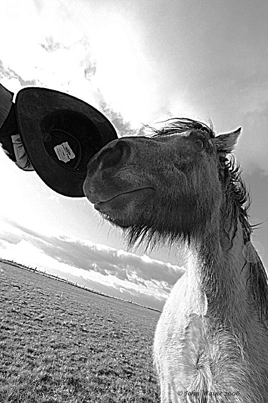 20060228 Pretentious Pony