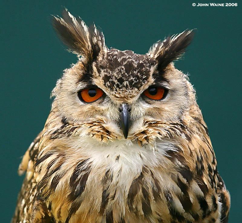 Im Watching You !