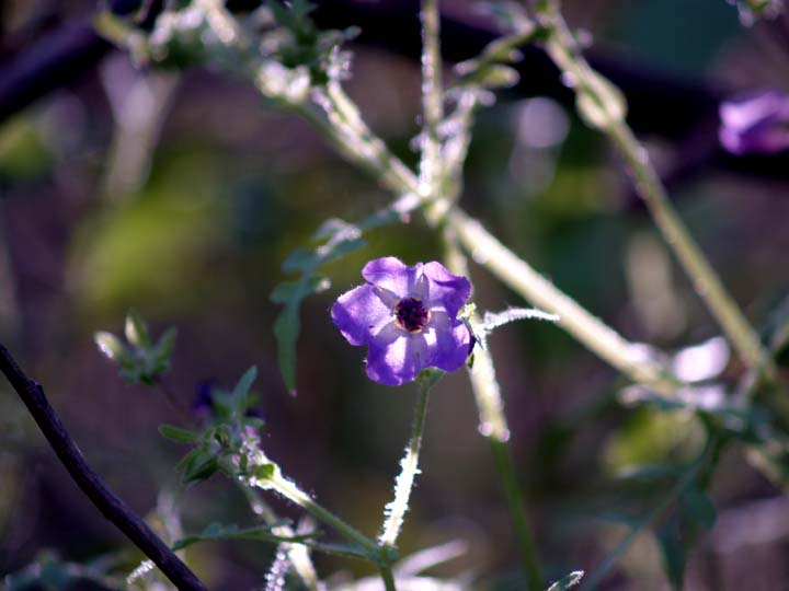 Backlit wild flower