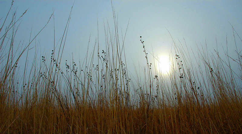 Cold Winter Sun over Grassland