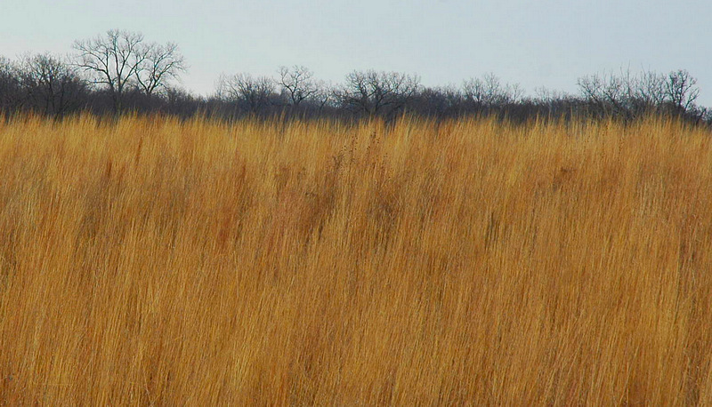 Winter Grasslands