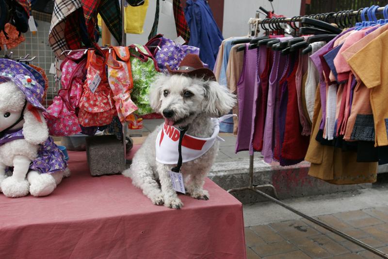 Market Dog3562.jpg