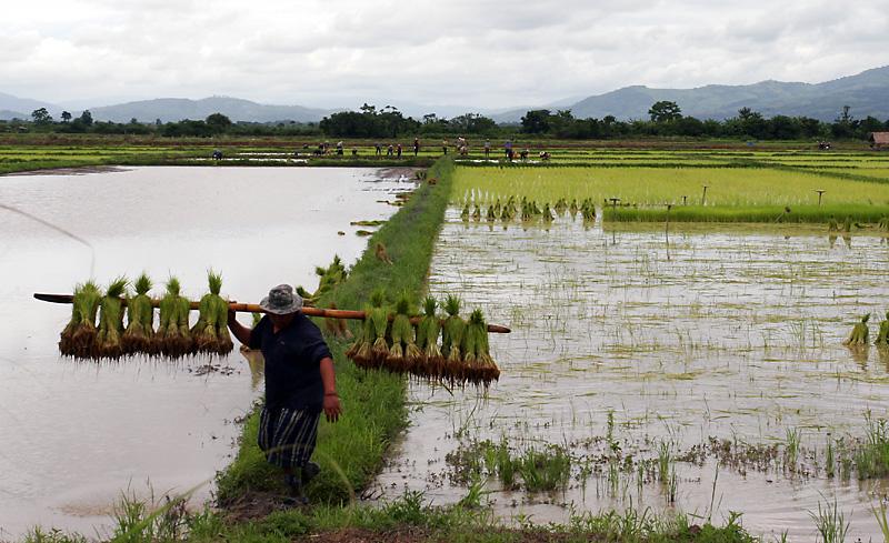 Rice Farmers.jpg