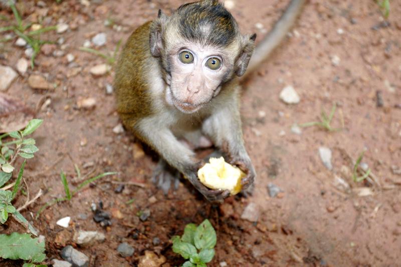 Hungry Monkey 422.jpg