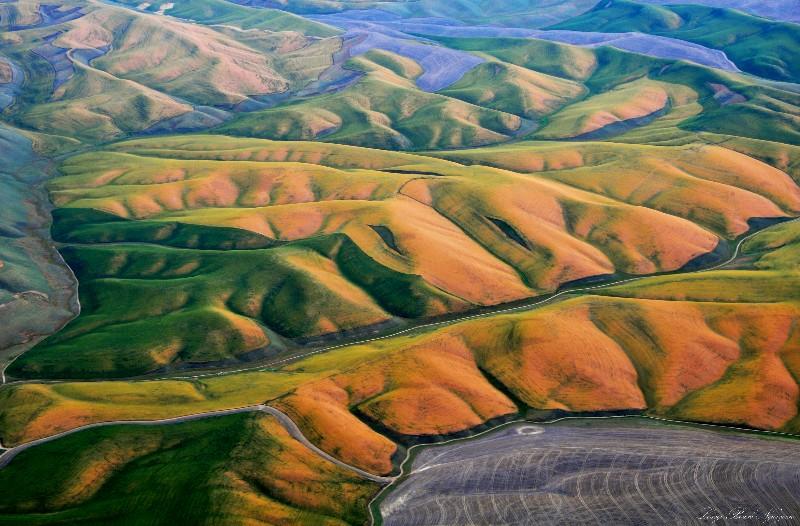 mosiac of colors in wheatfield