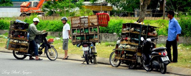 birds for sale, Da Nang, Vietnam