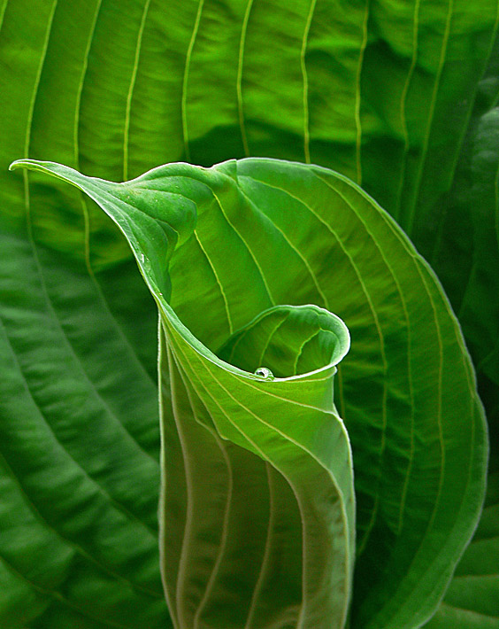 2nd<br>Droplet on a Sea of Green<br> by Stan Pepka