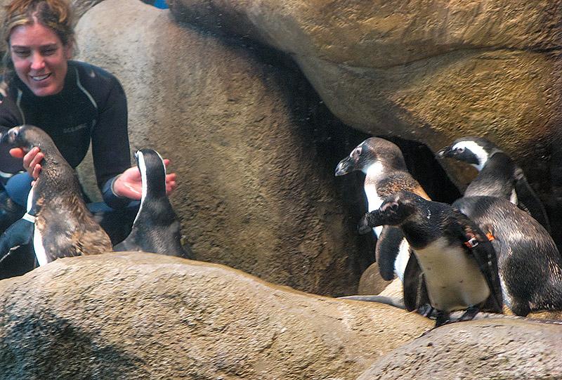 Pam Schaller, Senior Aquatic Biologist, with her penguins
