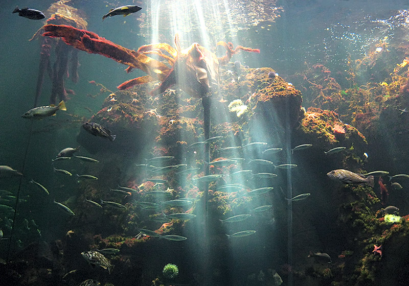 Final scene at the Aquarium that day