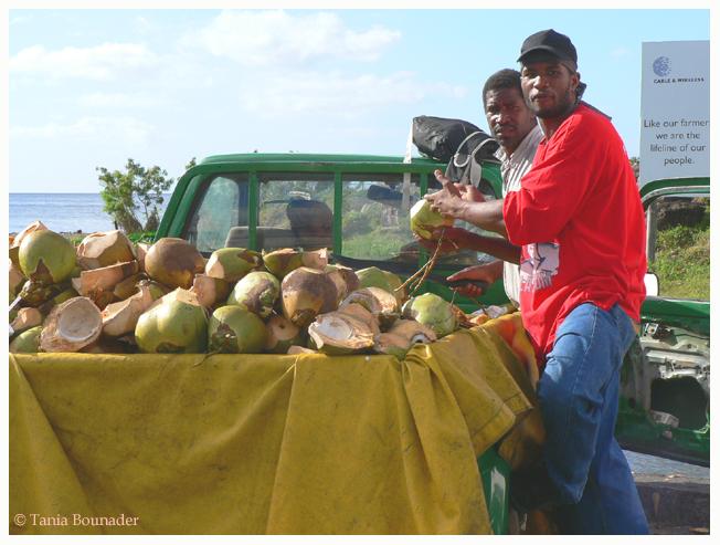 Coconut vendors