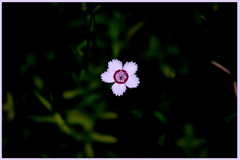 littleflower2.jpg