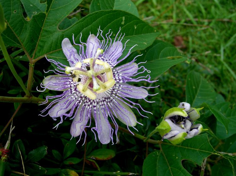 Flower, taken with  Casio Z-120