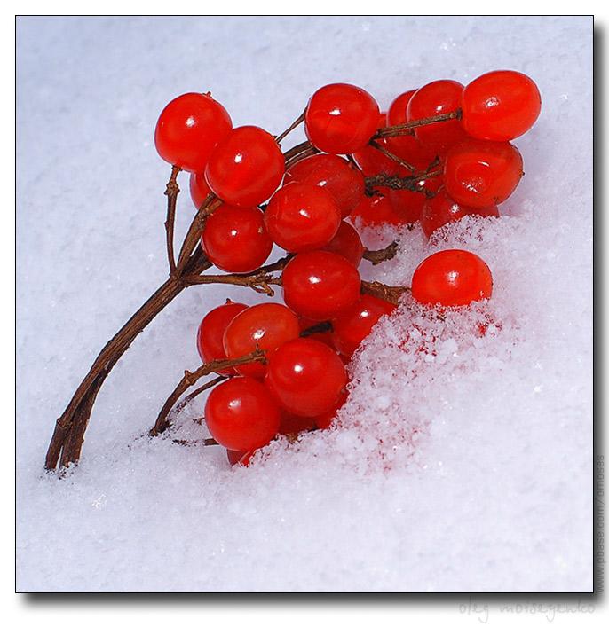 Ягоды в снегу своими руками 26