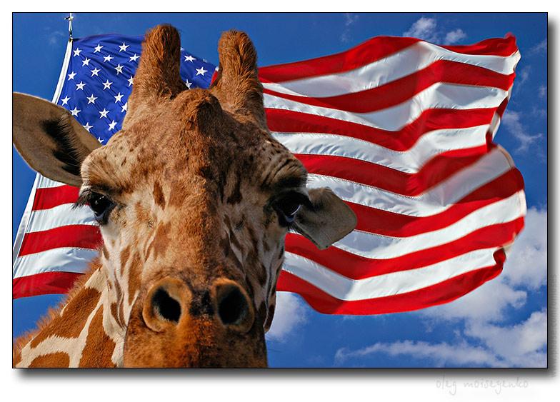 The National Giraffe