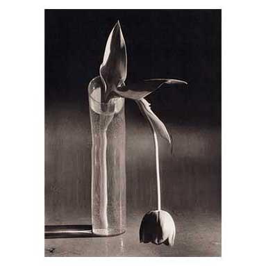 Melancholic tulip, 1939