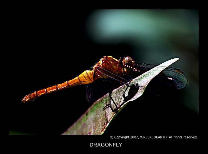 DRAGONFLY.jpg