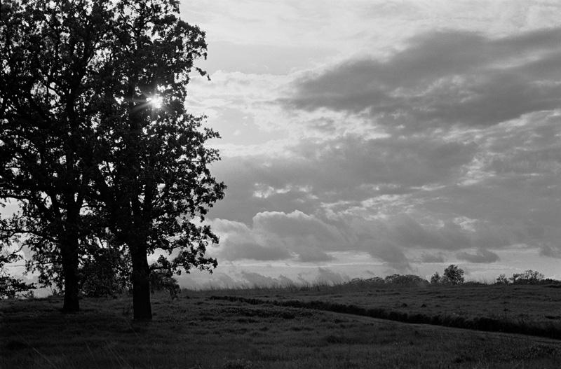 Oak Trees Topcon Super D 58mm 1pt4.jpg